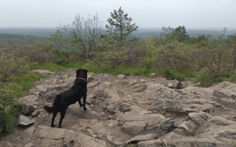 132% Humidity. Walking with Squirt - Blue Hills Reservation - South of Boston.