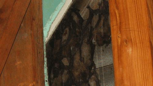 Relish. Bats in the Attic