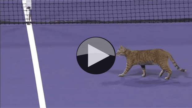 Doha 2016. Cat on the loose during set-point for Roberta Vinci